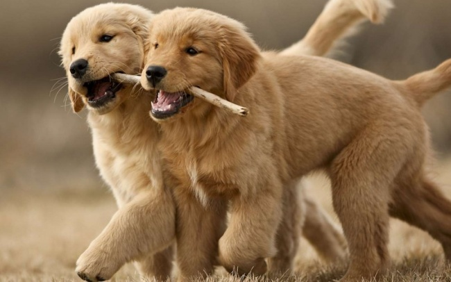 30 facts about animals that lift your mood