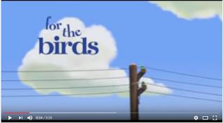 For Birds