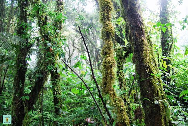 Reserva de Santa Elena, Costa Rica