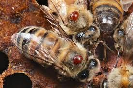 DIOFARM: Ελληνικό Βιολογικό Προμίγμα Μελισσοτροφών