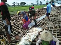Musibah Puting Beliung di Kedungupit Membuat Peternakan Rugi