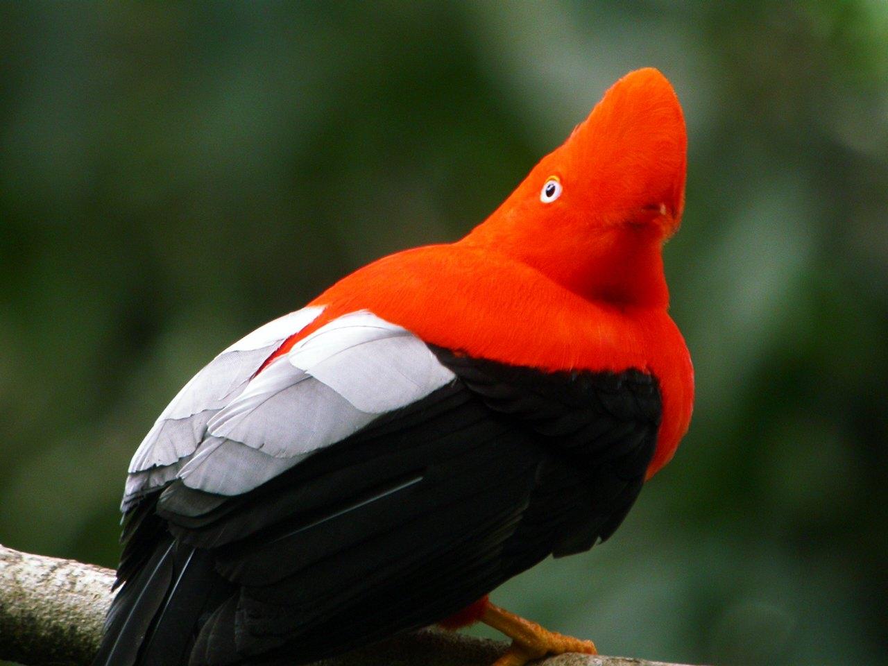 Flora Y Fauna Del Perú