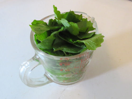 garlic mustard leaves packed in a cup