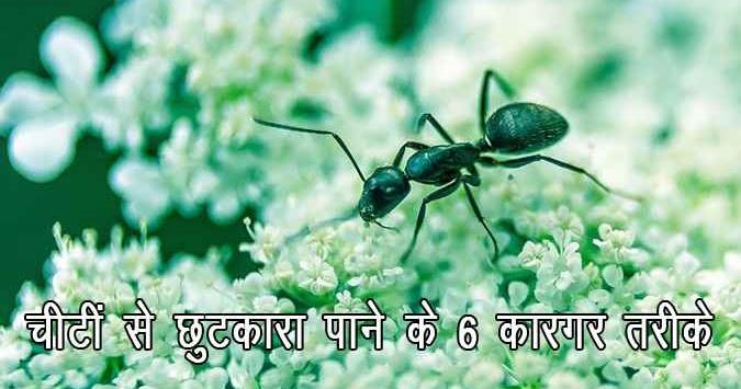 Useful Tips : Get Rid of Ants Naturally in Hindi - चींटी से छुटकारा पाने के 6 कारगर तरीके | Hindi Home Tips - हिन्दी होम टिप्स