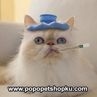penyakit flu pada kucing