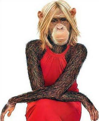 A via crucis da macaca. Monga procura um namorado no ônibus.