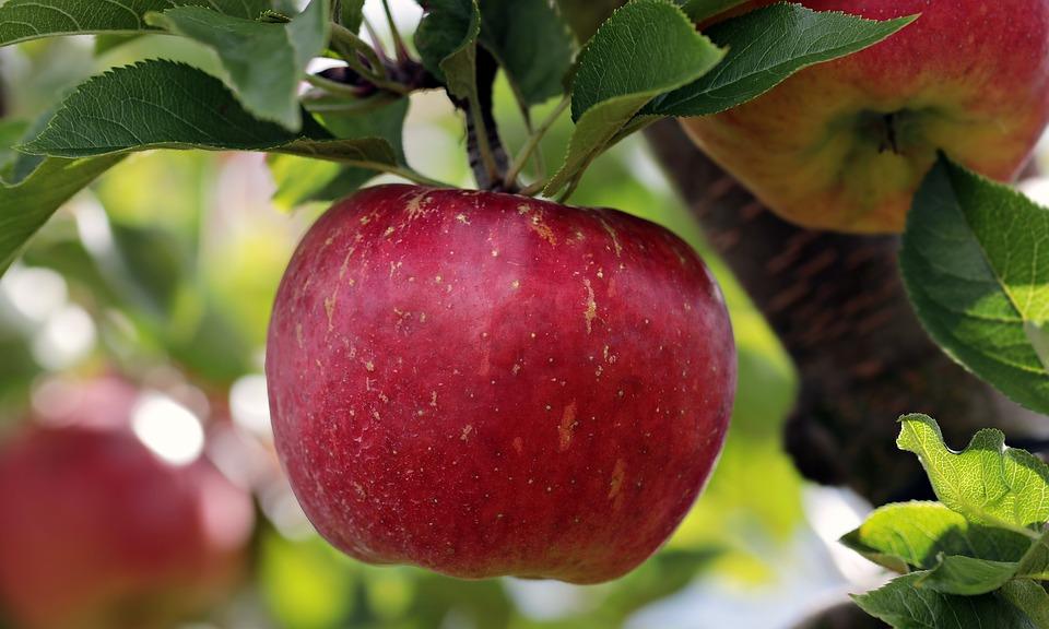 Wow, Diet Apel 5 Hari Bikin Anda Kaget Lihat Timbangan!
