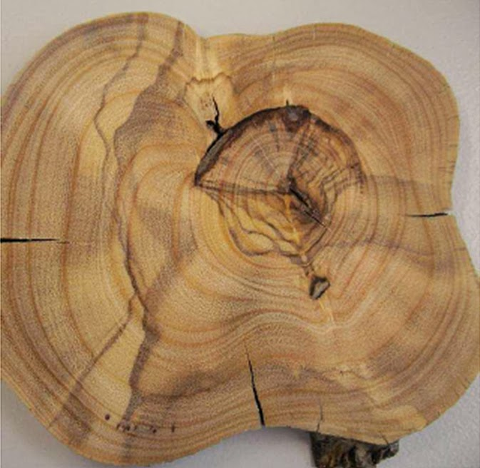 The truth is in the tree rings if you crossdate them Landscapes in Motion