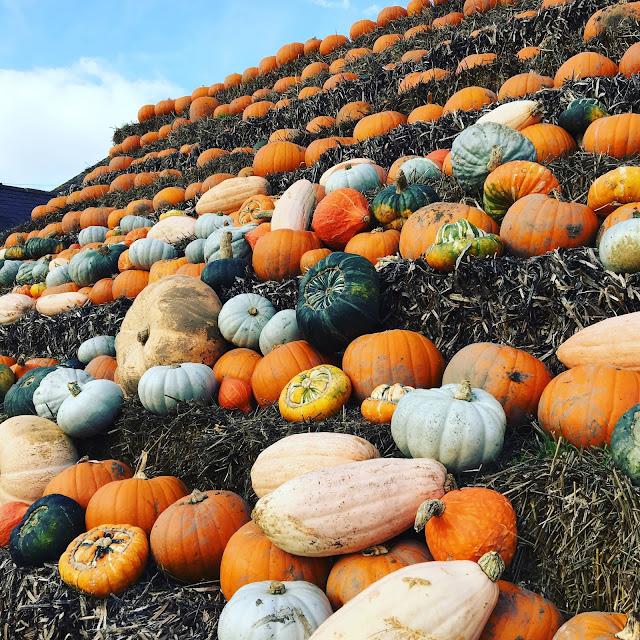 Pumpkin Picking at Llynclys Shropshire | Shropshire Days Out