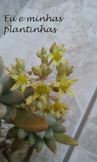 Flores marelas delicadas.
