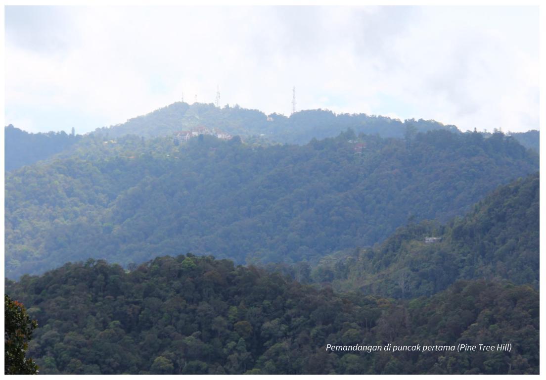 Pemandangan di puncak Pine Tree Hill