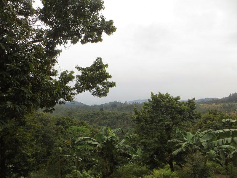 Вид с гор Самуи