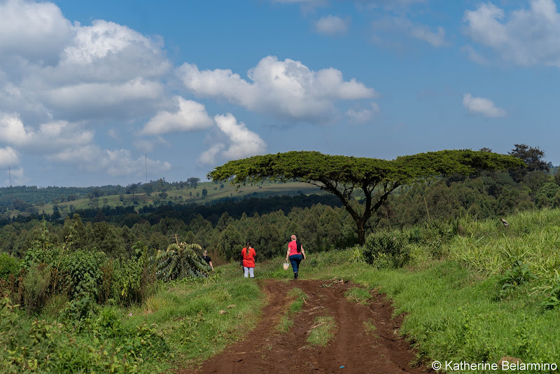 Farm Road Volunteering in Kenya with Freedom Global