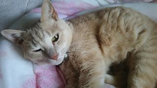 ちらりと目を開けたうちの猫