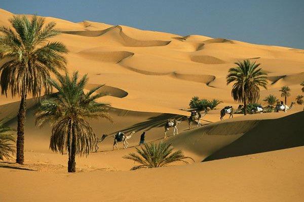 http://2.bp.blogspot.com/-FSlXO1NAZg0/VcYIe7JXqII/AAAAAAAAAbk/RSEzVdYeS5I/s640/unta-padang-pasir1.jpg