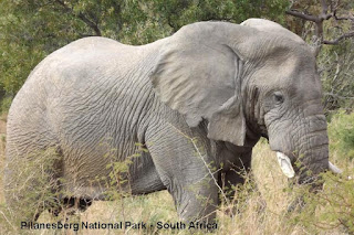 pilanesberg south africa elephant