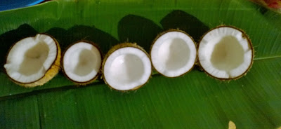 coconut halves after broken on the banana leaf