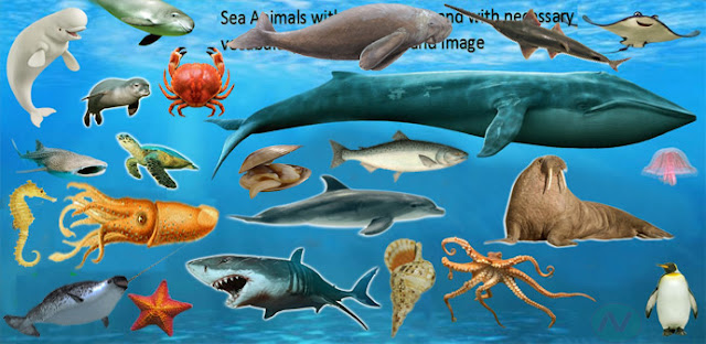 animals sea ocean names name vocabulary english necessary