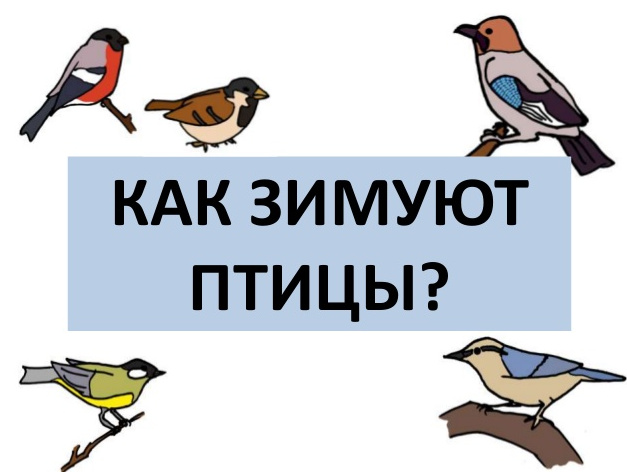 """презентация """"Как зимуют птицы"""""""