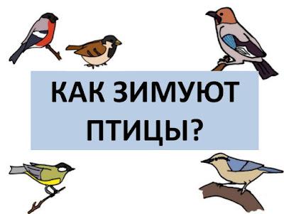 презентация как зимуют птицы. скачать. урок окружающий мир 1 класс