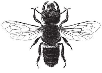 Wallace's Giant Bee was rediscovered alive and well after several decades. It is considered a living fossil, and is a problem for evolutionary views.