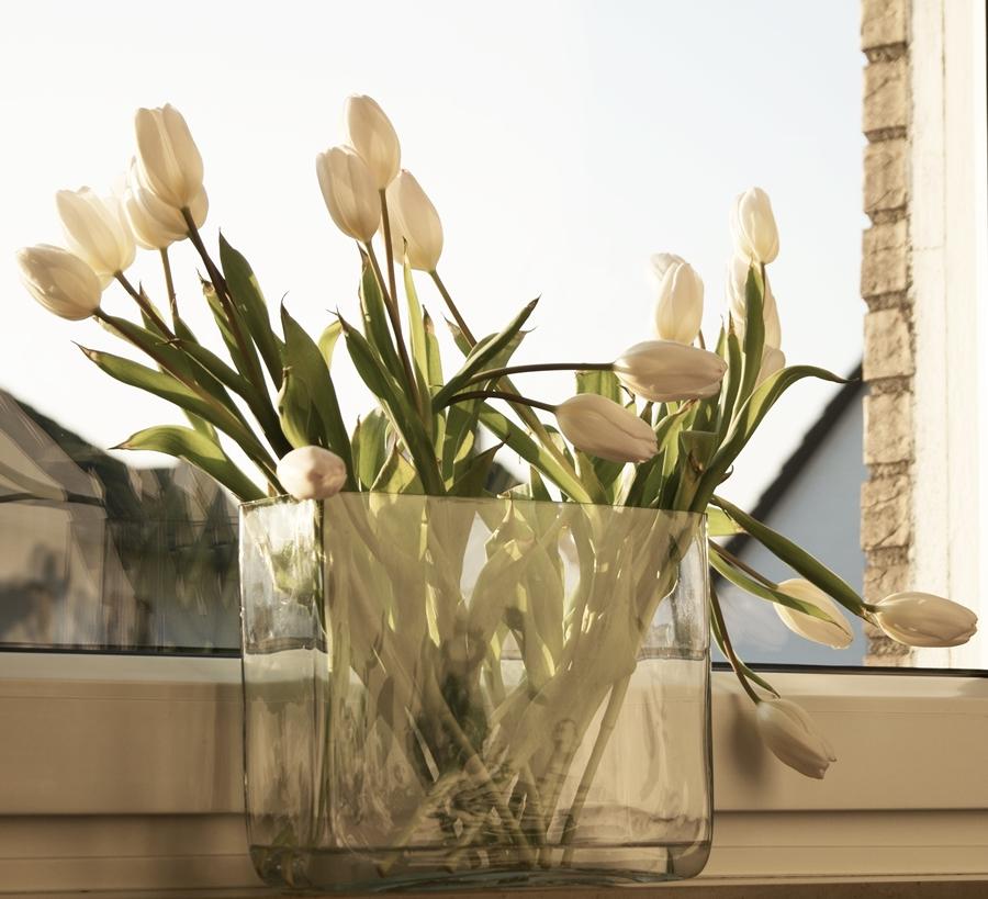 Blog + Fotografie by it's me fim.works - weißeTulpen mit lilafarbenen Spitzen auf schmalem Fensterbrett