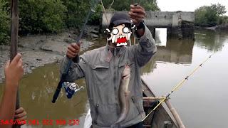 Master Essen Ikan Lele