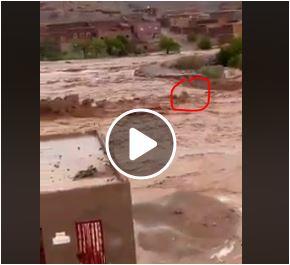 بالفيديو فيضان خطير بتنغير يجرف ثور القرية