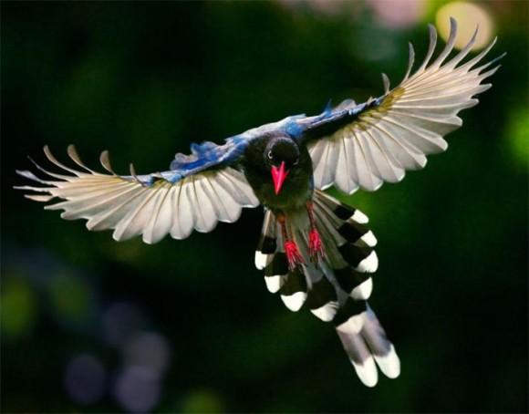 طيور نــادرة رائــــــعة bird_photography_04-