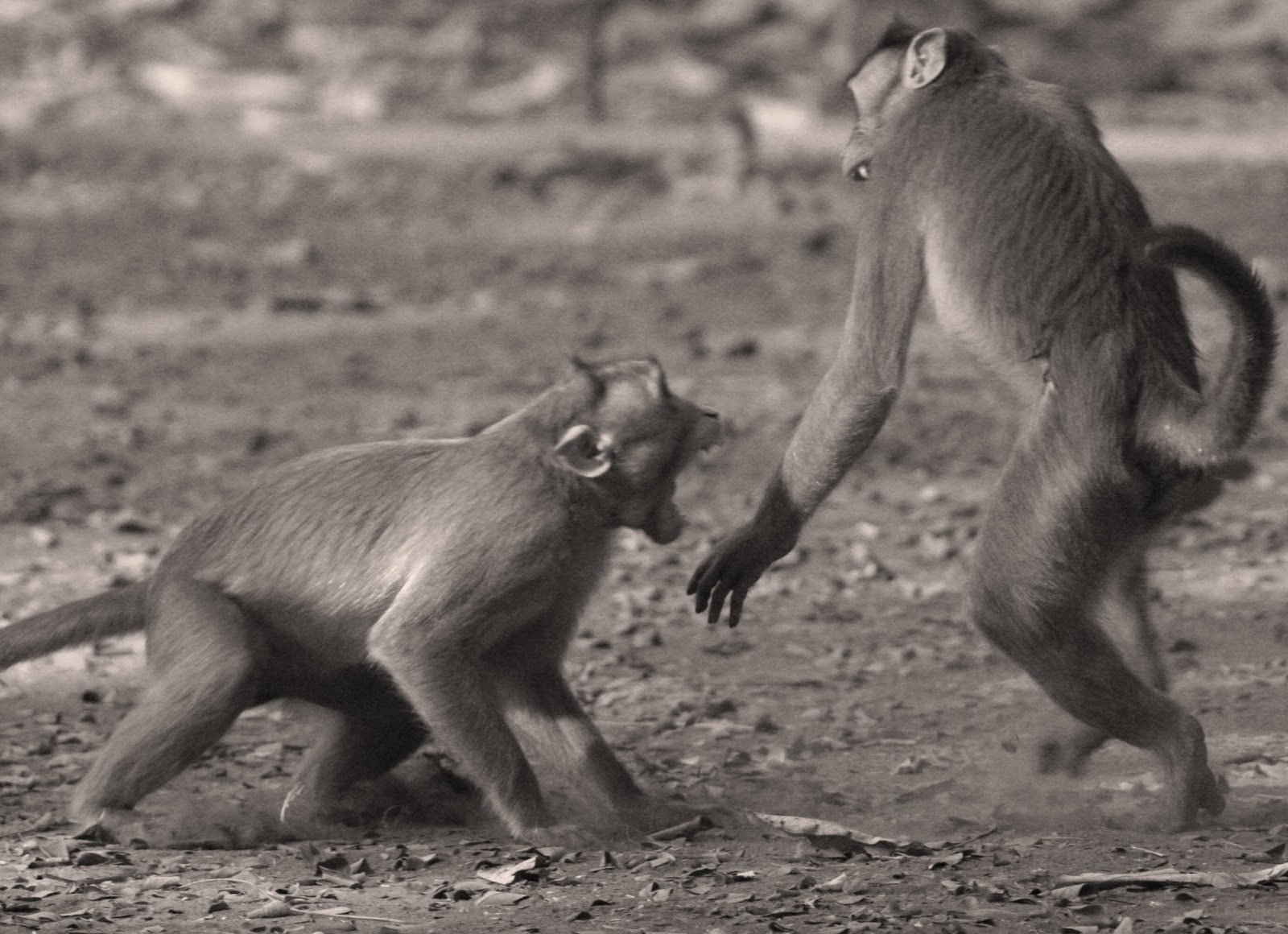 9916bcf38ac Sensible Self Defense: Not my circus. Not my monkeys