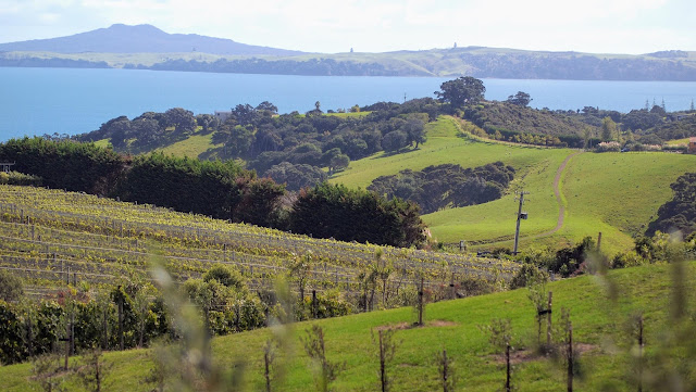View over Mudbrick Vineyard on Waiheke Island near Devonport Auckland New Zealand