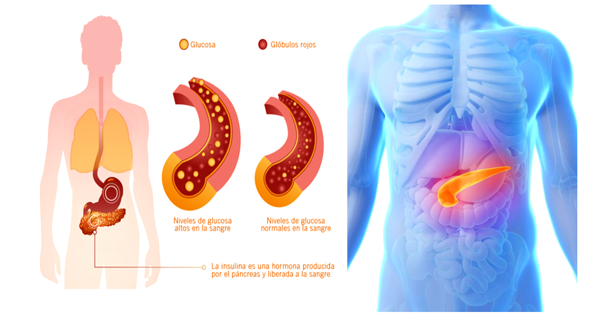 Famoso Ubicación Páncreas Humano Viñeta - Anatomía de Las ...