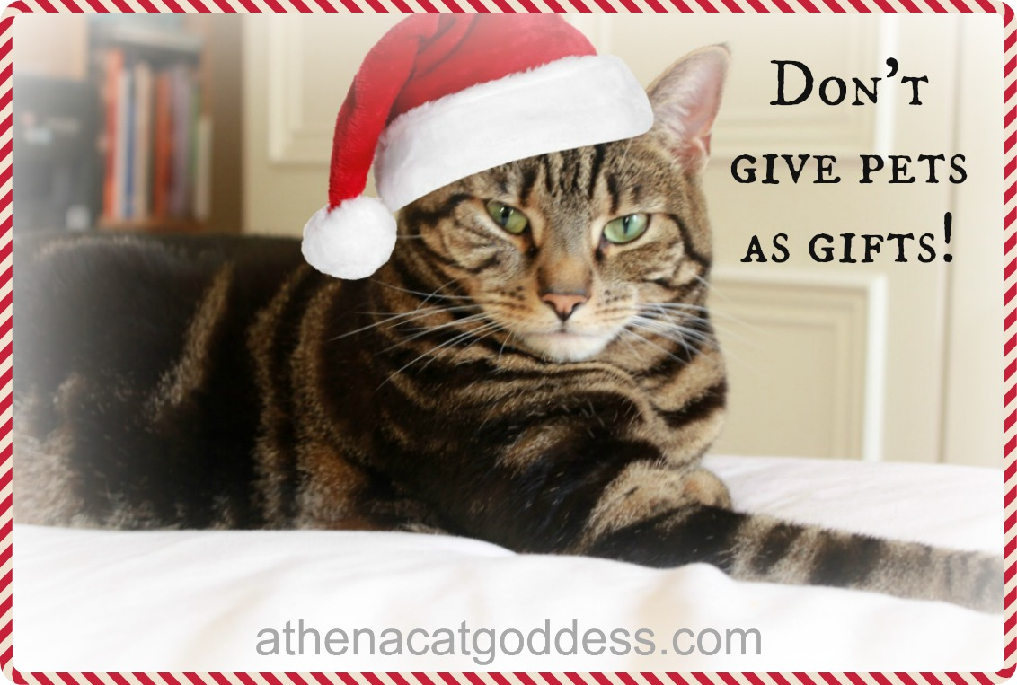 Don't give pets as gifts