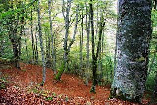 imagen del bosque de Peloño