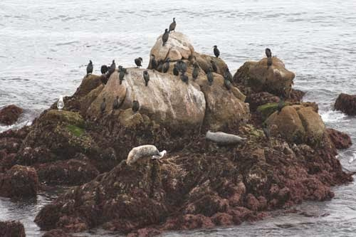 Birds and seals on the rocks.