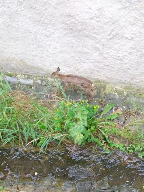 wild nature of the Czech Republic дикая природа Чешской Республики