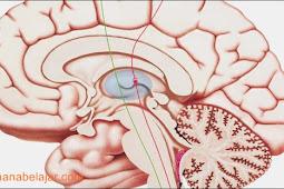 Jangan Siksa Otak Anda Sejak Waktu Sarapan
