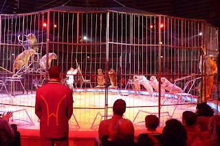 Circus Krone, domador de leones.