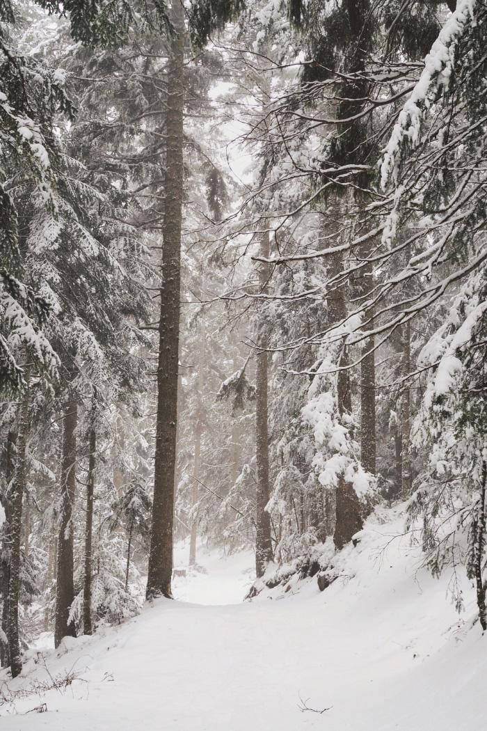 Forêt enneigée dans le Pilat en hiver
