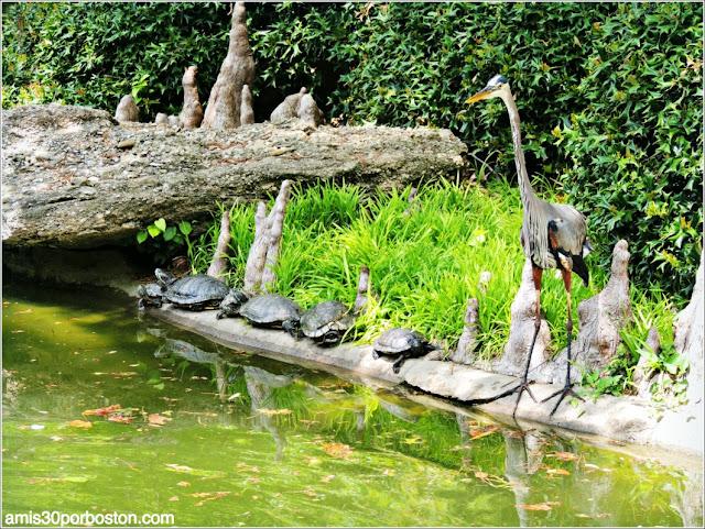 Tortugas Japonesas y Garza en el Jardín Japonés de Fort Worth