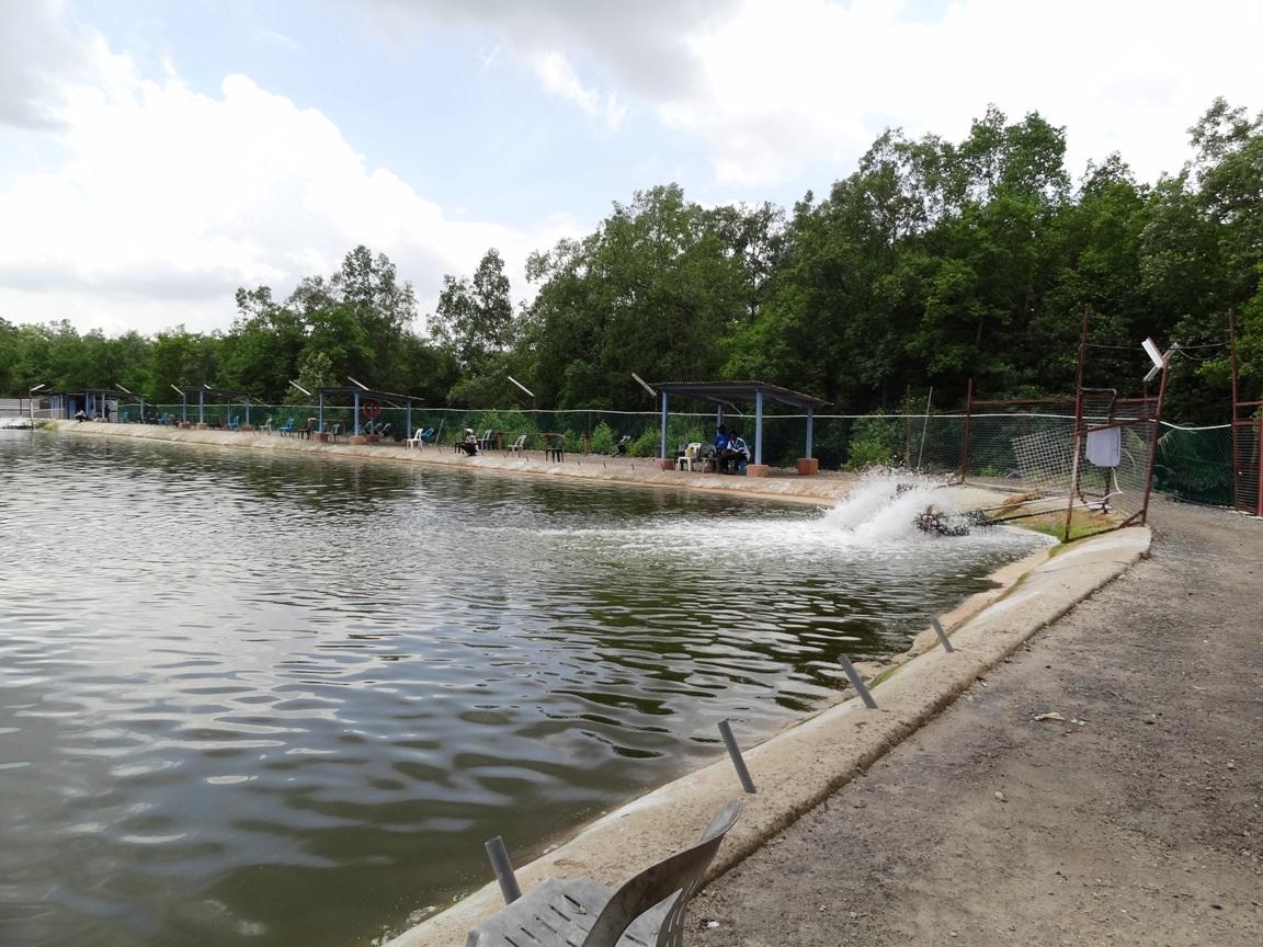 Brother fishing pond fishing spots in johor for Koi pond johor bahru