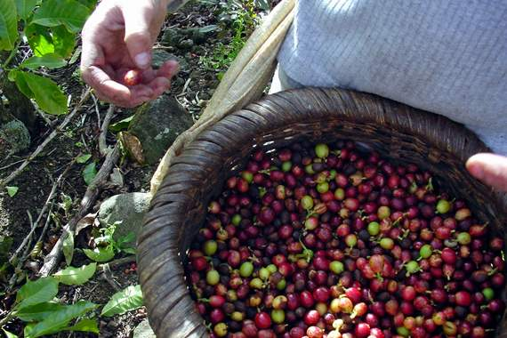 coffee-growing region