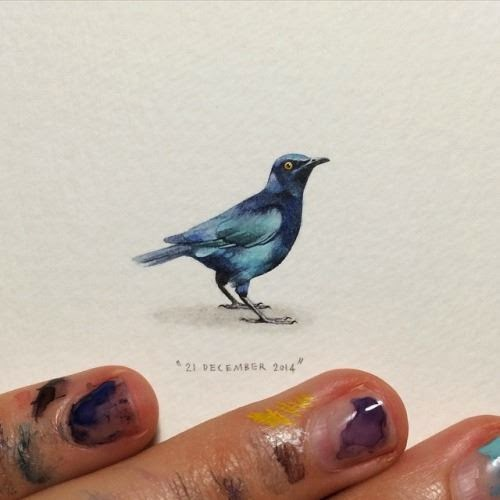 18-Cape-Starling-Lorraine-Loots-Miniature-Paintings-Commemorating-Special-Occasions-www-designstack-co