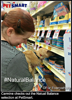 Carmine and I at PetSmart checking out the selection of Natural Balance Wild Pursuit for cats.