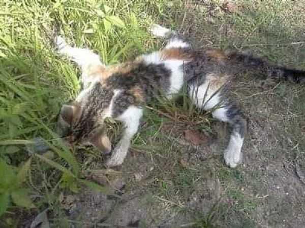 Gatos estão sendo envenenados no município de Pedra Branca.