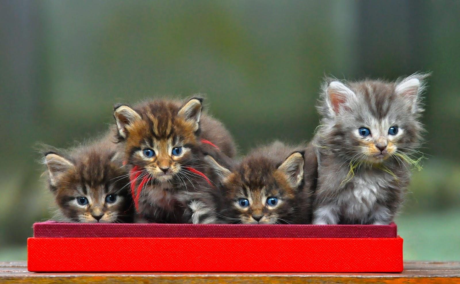 Kenapa Kucing Kurus Setelah Melahirkan Bayi Kucing Mati