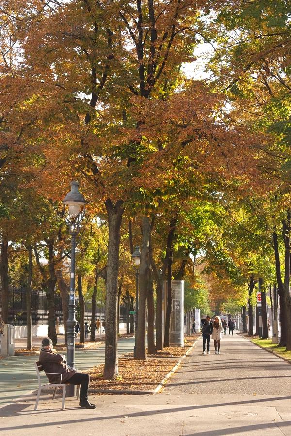 vienne vienna ring automne
