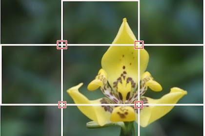 Tips Fotografi : Menggunakan Rule Of Thirds Untuk Membuat Foto Lebih Menarik