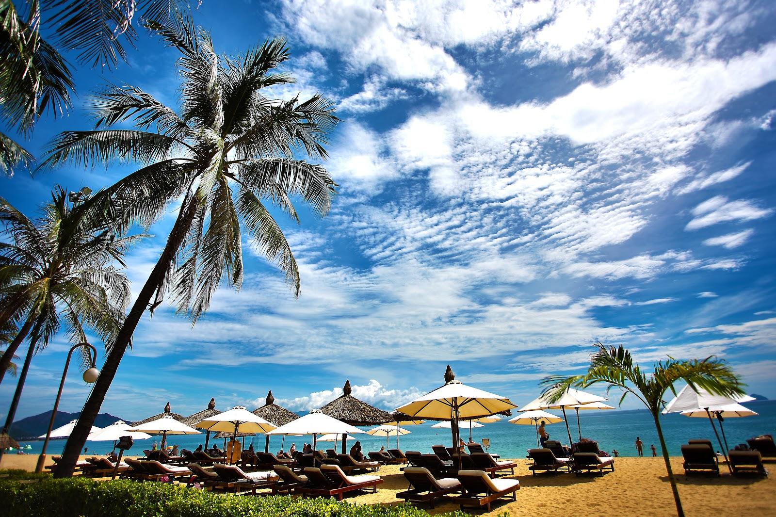 晴れた夏の日の椰子の木が生えた明るい海辺