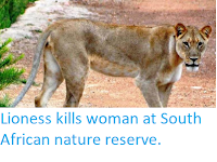 https://sciencythoughts.blogspot.com/2018/03/lioness-kills-woman-at-south-african.html
